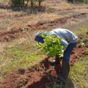 Fieldwork in action
