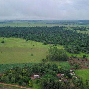 Agroforestry arial view