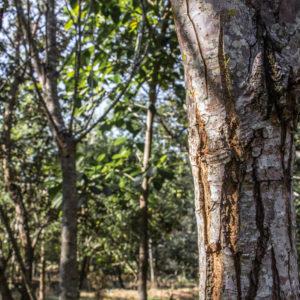 Bark on trees