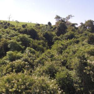 Forest degraded remnants