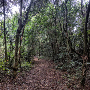 Landscape at the Morro do Diabo forest