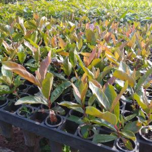 Nursery showing plants