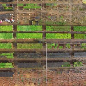 Community nursery aerial drone view
