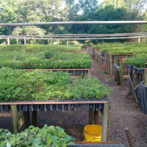 Community nursery and watering system
