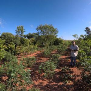 Man planting agroforestry