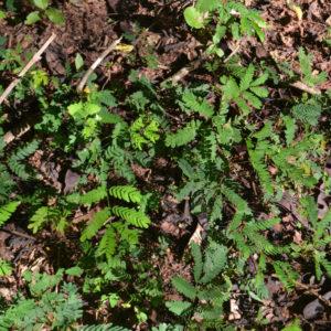 Planting regeneration