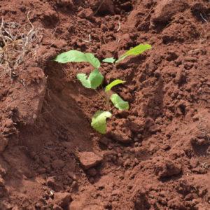 Planting soil scarification